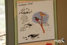 Crimson Chat