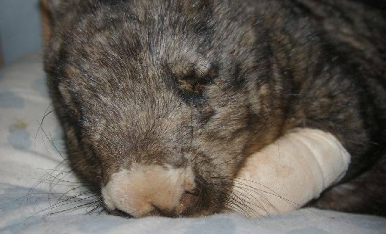 Australian Wombat Rehabilitation Centre - Injured Wombat