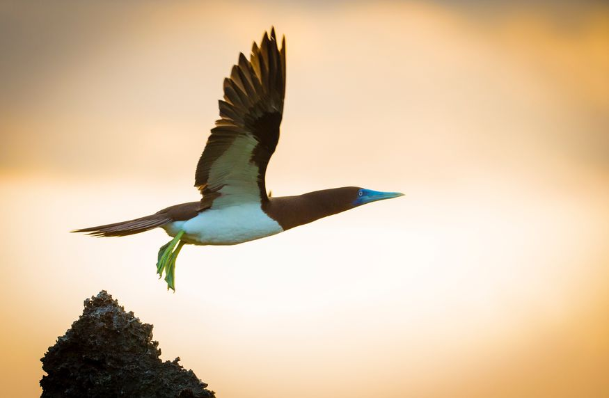 Bird N Nature Week - Christmas Island - Chris Bray Photography CITA
