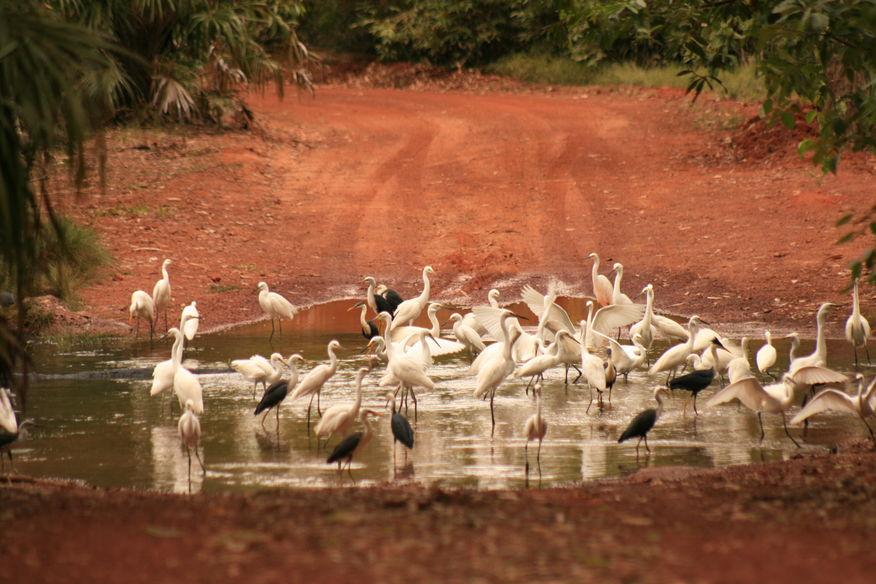 Birdwatching - Creek Crossing Cobourg Peninsula - Venture North NT