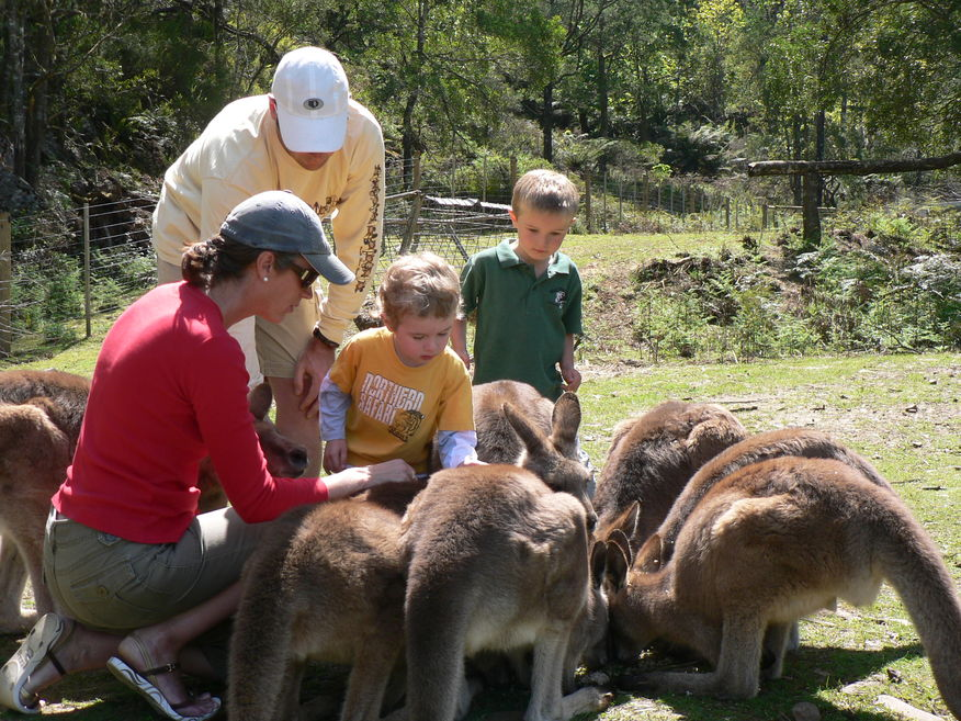 Feeding Kangaroos at Wings Wildlife Park