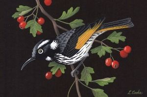 Lyn Cooke Wildlife Artist - New Holland Honeyeater and Hawthorn