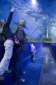 AQWA's Shipwreck Coast walk through aquarium