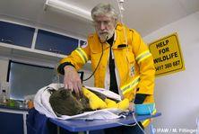 Koala in Care