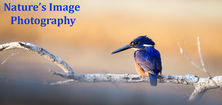 Natures Image Photography - Kingfisher