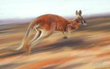 Steve Morvell Art for Conservation