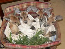 The Kangaroo Sanctuary - Bundle of Roos