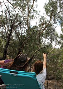 Truganina Koala and Janine - Koala Conservation Day