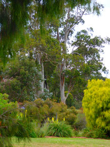 View of Strezlecki Ranges from Ungulla Country Garden
