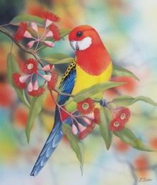 Lyn Cooke Wildlife Artist - Eastern Rosella and Flowering Gum