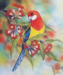 Lyn Cooke Wildlife Artist - Eastern Rosella and Flowering Gum