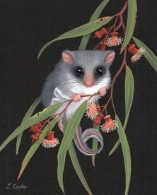 Lyn Cooke Wildlife Artist - Feathertail Glider and Coral Gum