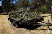 Branches from a fallen tree loaded for Possum Paws Wildlife Shelter