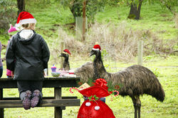 On the 12th Day of Christmas People and Wildlife Celebrate together with a picnic in the bush.