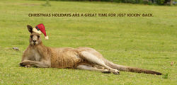 On the 8th Day of Christmas this Roo Relaxes