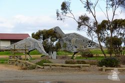 Big Mallee Fowl - Patchewollock - Vic