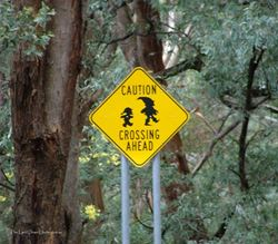 This one makes you look twice - bush pixie crossing - Victoria