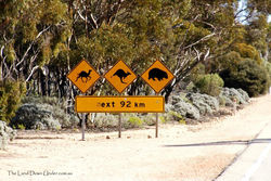 Camel, Kangaroo and Wombat Sign - South Australia