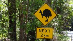 Cassowary Crossing Country - by Jacqueline Graf