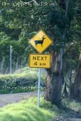 Watch out for deer - This sign in on the outskirts of Syndey! - New South Wales