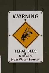 Feral Bees - these bees can be aggressive.