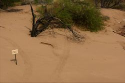 Freshwater Crocodile Tracks - Northern Territory