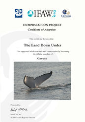 Humpback Whale Adoption Certificate - Gawura