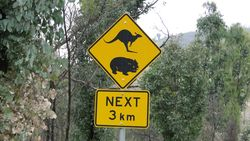 Kangaroos and Wombats Ahead - by Jacqueline Graf