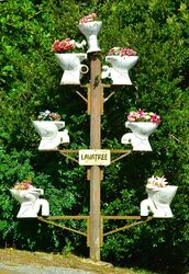 Lavatory - no - Lavatree. Dorrigo NSW. Photo by Penny Smith