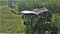 Lazy Turtle Letterbox - photo by Vivienne Tracy