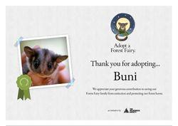 Leadbeaters Possum Certificate - Buni