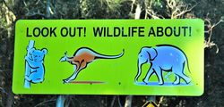 Crikey - look out for wildlife even elephants in the NSW bush - photo by Penny Smith