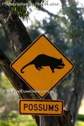 Look out for Possums