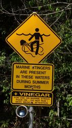 Marine Stingers - by Jacqueline Graf