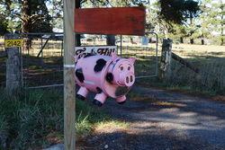 Pink Pig mailbox - regional NSW