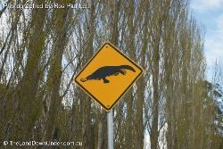 Platypus Crossing - yep, watch out for Platypus crossing the roads - Tasmania