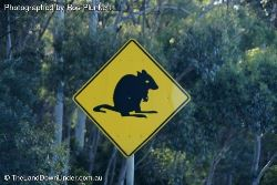 Potoroo Caution Sign - Tasmania