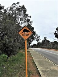 Quenda - Southern Brown Bandicoot Sign - Perth Hills WA. Photo by Sean Van Alphen