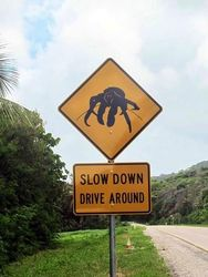 Robber Crab Road Sign - by Linda Cash - Christmas Island