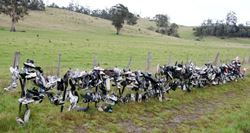 A fence made out of shoes - why? Who knows. - Tasmania
