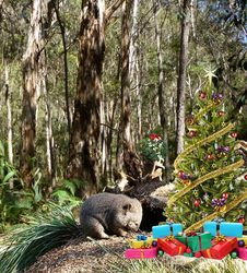 On the 6th Day of Christmas It's a Bush Christmas and this little Wombat is Peeking at the Presents! (I'm sure he's hoping one is his)