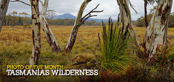 The wilderness of Tasmania.