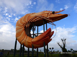 The Big Prawn - Ballina NSW by Janelle Swainston