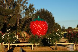 The Big Strawberry at The Big Strawberry at Koonoomoo Victoria