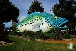 The Giant Murray Cod - Swan Hill VIC