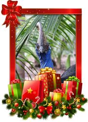 The 3rd Day of Christmas is a Cassowaries Christmas!