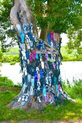 Thong Tree. This tree is slowly being covered in peoples thongs. Grafton NSW. Photo by Penny Smith