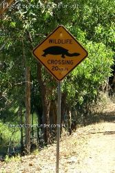 Watch for Turtles and other wildlife - Fogg Dam - Northern Territory