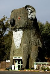 The Big Koala - Dadswells Bridge - Victoria