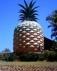 The Big Pineapple - Queensland